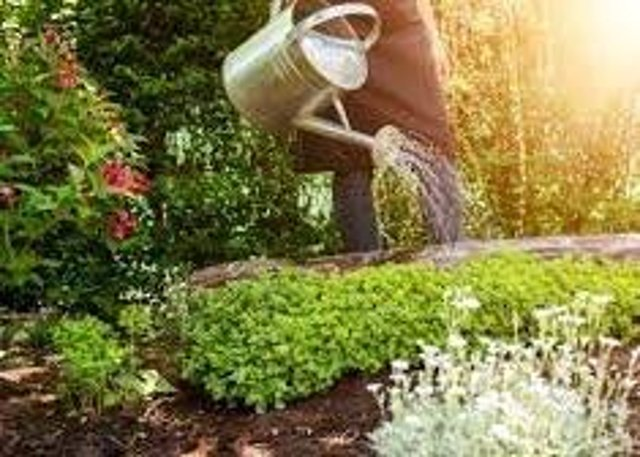 Borderers are being urged to water their garden plants with a watering can rather than a hose as part of a drive to save water by Scottish Water.