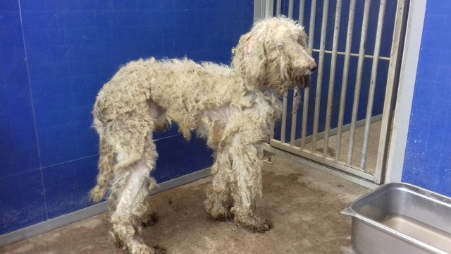 One of the dogs dumped in Jedburgh.