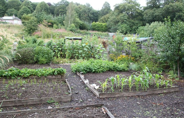 The Wilton Park Road allotments in Hawick.