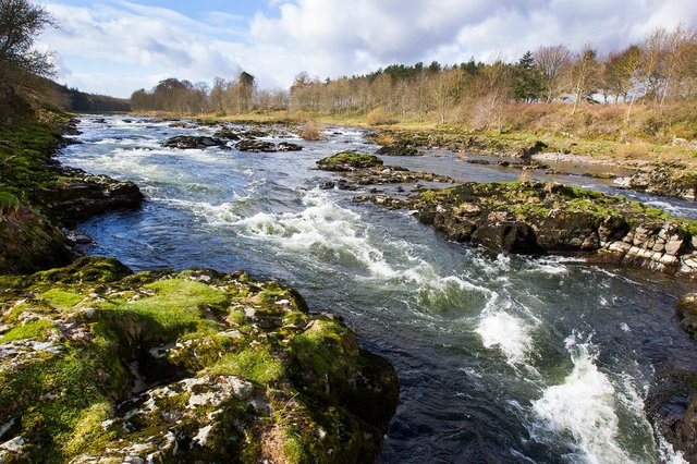A stretch of the River Tweed, south of Rutherfords on Trows Farm, between Maxton and Kelso. (Photo: BILL McBURNIE)