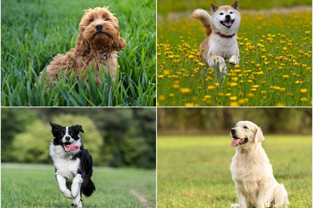 These are the most popular dog breeds in different parts of the world