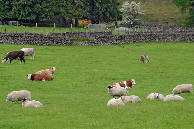 It's hoped the improvements to the St Boswells centre will help support animal health and livestock production.