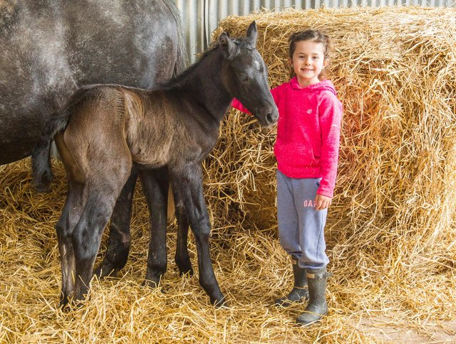 Scarlett-Rose Ballantyne with her newborn foal, Bellendene Buttons. (Photo: BILL McBURNIE)